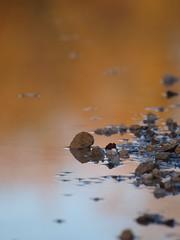 Sur les traces du petit poucet ***--+° (Titole) Tags: graviers stones puddle flaque reflection nicolefaton titole storybookwinner thechallengefactory 15challengeswinner