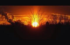 IMG_2869.JPG (Jamie Smed) Tags: autostitch sunset sun 2008 tree letterbox app snapseed iphoneedit silhouette jamiesmed sky light handyphoto trees skies facebook geotagged geotag sony a200 landscape cincinnati dslr alpha vsco ohio midwest vscocam photography