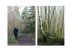 Diptych (Rosie Knightley Photography) Tags: longexposure trees light selfportrait nature beauty self woodland landscape landscapes woods natural surrealism surreal land selfportraiture treescape naturesbest landscapephotography naturalenvironment naturesbeauty naturephoto landscapebeauty landscapephoto