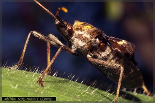 Insect_7934