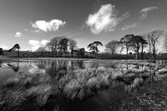 Flooding at Priddy, Somerset, Ian Wade (Disorganised Photographer - Ian Wade - Travel, Wil) Tags: ian flooding somerset pools wade transparent priddy