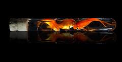 Congestion.jpg (Bob's Corner) Tags: goldfish tabletop testtube poissonsrouge eprouvette