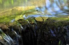 Source du Flancou, Montsales, Aveyron, Midi-Pyrénées (lyli12) Tags: nature eau reflet paysage cascade campagne aveyron ruisseau midipyrénées poselongue