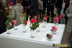 "Izložba kamelija 2014, Udruga ljubitelja kamelija Opatija • <a style=""font-size:0.8em;"" href=""http://www.flickr.com/photos/101598051@N08/13631384275/"" target=""_blank"">View on Flickr</a>"