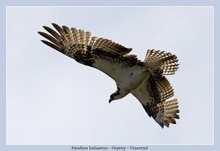 Osprey, explored.
