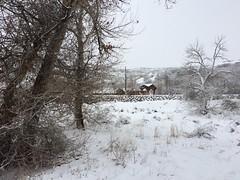 IMG_2194 (augiebenjamin) Tags: winter provocanyon mountains orem provo lindon utah snow clouds trees sky byu brighamyounguniversity art