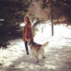 The woods and the wolf (amyeja) Tags: trees pine snow winter scenic adventure outdoors nature woods malamute dog