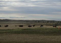 American Prairie Reserve 13