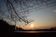 20170329_003_2 (まさちゃん) Tags: 夕陽 夕暮れ時 桜