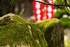 moss (Andi [アンデイ]) Tags: japan kyotango kyoto amanohashidate pinetree beach tradition travel photography 日本、