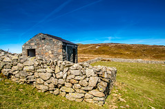 Gimme Shelter (Tony Shertila) Tags: 20170325115544 penmaenmawr wales europe outdoor pig penmaenmawrcommunity unitedkingdom britain fells hills weather day clear sky building structure field wall architecture gbr