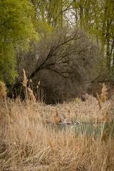 P1600950-1 (picicsoda) Tags: natura nature panasoniclumixg7 exakta 75300mm manual vintagelens countryside wildlife szelkótó lakeszelkó hungary