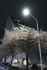 IMG_0545 (digitalbear) Tags: canon powershot g9x markii mark2 nakano dori sakura cherry blossom blooming fullbloom tokyo japan yozakura hanami