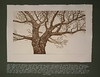 Ein Baum nur (art.vestifex) Tags: etching aquatinta radierung ralfschneider vestifex realismus realism baum tree