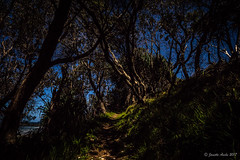 Spooky moonlit track to the beach (NettyA) Tags: 2016 australia diggerscamp nsw newsouthwales yuraygirnationalpark coastal night nightscape stars spooky track path dark trees