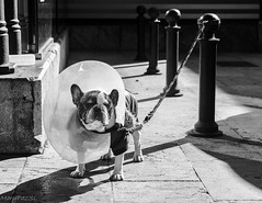 Los dias de sol salgo con la pamela. (MaryPazSL) Tags: dog blackandwhite animals street blancoynegro perro monochrome flickr sony