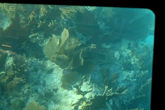 47. John Pennekamp glass bottom boat (Misty Garrick) Tags: johnpennekamp johnpennekampreef johnpennekampcoralreefstatepark coralreef florida keylargofl keylargo floridakeys atlanticocean