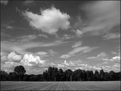 *** (Marta Wojtkowska) Tags: monochrome landscape sky clouds field bw blackandwhite mediumformat 645 mamiya 645af mamiya645af 120 rollfilm kodak trix400 kodaktrix400 400tx hc110 kodakhc110