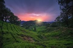 bukit brinchang sunrise (陈成) Tags: beauty malaysia johor langsat tanjung sunset sunrise light landscape village fish tranquil nature serene daybreak dawn ray people brinchang bukit cameron highland tea plantation ipoh perak pahang