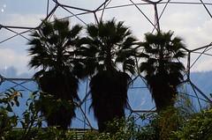 Three palms (caro-jon-son) Tags: eden