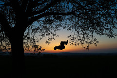 Sunset backflip (corentin.sch) Tags: salto jump shot photography canon movement sunset backflip