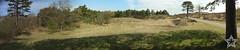 Panorama Noord-Hollands Duinreservaat (Jane Starz) Tags: panorama hugin noordholland northholland noordhollandsduinreservaat bergen bergenaanzee duinbos dunes duneforest netherlands thenetherlands beutifulholland