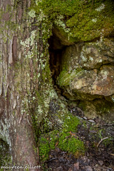 The Mini Keyhole (maureen.elliott) Tags: rock rockface moss lichen hiking treetrunk brucetrail nottawasagabluffs outdoors trail climbing nature