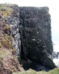 cliffs of latrabjarg (kexi) Tags: iceland europe cliff cliffs steep latrabjarg wild north nature birds nestinggrounds vertical canon may 2016 dark rocks seagulls flying instantfave
