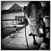 India series (Nick Kenrick..) Tags: hipstamatic johnslens aobwfilm india rajasthan pushkar hindu