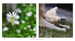 enfolded (Dave (www.thePhotonWhisperer.com)) Tags: kuleshov studio26 agnes bruno embrace entwined