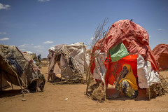 Somaliland_Mar17_0584 (GeorginaGoodwin) Tags: georginagoodwingeorginagoodwinimageskenyakenyaphotojournalistkenyanphotojournalist kenyaphotographer eastafricaphotographer kenyaphotojournalist femalephotographer idps refugees portraits portraitphotographer canon canon5dmarkiii canonphotos drought famine somalia somaliland malnutrition foodsecurity donorfunding aid foodaid wash health sanitation hornofafrica