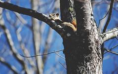 hiding from the dog (taralees) Tags: april sunshine springpartyhasbegun springonrabbitridge floraandfauna