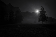 maletg en alv e nair [Schwarweissbild] (Toni_V) Tags: m2403355 rangefinder digitalrangefinder messsucher leica leicam mp typ240 28mm elmaritm12828asph hiking wanderung escursione randonnée blackwhite bw monochrome schwarzweiss fog nebel mist stluzisteig graubünden grisons grischun backlight sun frühling tree alps alpen switzerland schweiz suisse svizzera svizra europe ©toniv 2017 170325