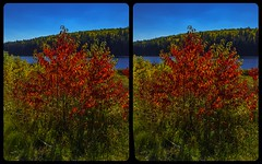Indian Summer in Ontario 3-D / Stereoscopy / CrossView / HDR / Raw (Stereotron) Tags: north america canada province ontario indiansummer autumn fall vibrant colors forest woods outback backcountry crosseye crosseyed crossview xview cross eye pair freeview sidebyside sbs kreuzblick 3d 3dphoto 3dstereo 3rddimension spatial stereo stereo3d stereophoto stereophotography stereoscopic stereoscopy stereotron threedimensional stereoview stereophotomaker stereophotograph 3dpicture 3dglasses 3dimage twin canon eos 550d yongnuo radio transmitter remote control synchron kitlens 1855mm tonemapping hdr hdri raw