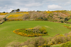 Island of Gorse (Keith in Exeter) Tags: gorse copse island meadow field grass yellow flower stonebarrow hill trees landscape spring outdoor dorset england