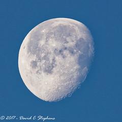 Waning Gibbous Moon (dcstep) Tags: waning moon waninggibbousmoon astro luna morning bluesky lunar aurora colorado unitedstates us f4a8378dxo cherrycreekstatepark canon5dmkiv ef500mmf4lisii ef14xtciii handheld allrightsreserved copyright2016davidcstephens dxoopticspro1131 nature urban urbannature sanctuary copyrightregistered04222017 ecocase14949772801