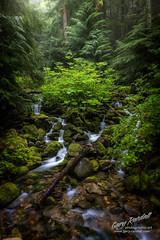 Mount Hood National Forest Scene (Gary Randall) Tags: gar86072 oregon mthoodnationalforest rainforest creek moss ferns green