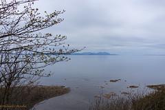 Tranquil (Rourkeor) Tags: scotland unitedkingdom gb spring sea calm culzean island buds branches blue horizon reflections peaceful sony sonyrx1r rx1r fullframe carlzeiss t sonnar
