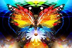 Flight (mfuata) Tags: flight uçuş özgürlük freedom kaçış göç butterfly kelebek uyanış wakening