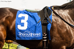 TAA (Casey Laughter) Tags: racehorse turfway thoroughbred horse horseracing horses winner loser fun racing racetrack race track saddlecloth tack gate taa