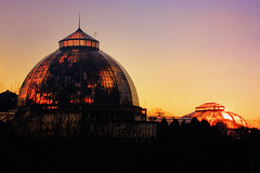 Sunset at Scripps Conservatory (Notkalvin) Tags: cunset scrippsconservatory notkalvin mikekline notkalvinphotography outdoor belleisle detroit glass windows evening shinethrough explore explored flickrexplore thankyou
