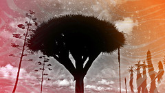 I roam looking ... looking breathlessly (Dom Guillochon) Tags: desert sky plants illusions surreal time life reality dream day night merging real unreal expression earth parallel world vision roam wandering multiverse existence mind