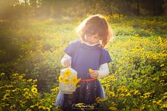 Olivia- All is light (ESTjustPHOTO - Elias S Tilavgi) Tags: child photography yellow flowers back light fun teddy bear innocence kids spring fleur flora bright sunny outdoor blossom colorful people portrait