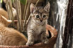 Aprendiendo a vivir (SinRaquel) Tags: gato animal bebe cachorro