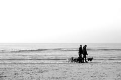 north sea (Alla Romanova) Tags: northsea beach sand people blackwhite blackandwhite monochrome dogsandpeople dogs