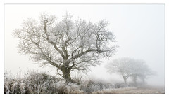 Cold Morning (Dave Fieldhouse Photography) Tags: staffordshire staffordshirelife lichfielddistrict lichfield hedgerow winter trees frozen frost fog freezingfog local morning sunrise fuji fujifilm fujixt2 wwwdavefieldhousephotographycom