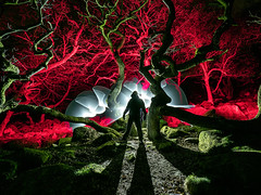 Marvel-ish (Stephen Elliott Photography) Tags: peakdistrict derbyshire padley woods light painting night olympus em1 mk2 714mm ledlenser lume cube