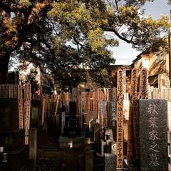 The house of memories. #tokyo #japan #cemetery #everydaylife... (lorenzogrif) Tags: streetphotography iphone myfeatureshoot cemetery geniusloci memories japan everydaylife tokyo