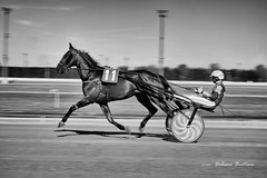 1704_Vinovo_6071_05 (UrBert) Tags: horse black trotto race trott slow panning bn bw