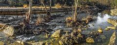 Brilliant (keith_shuley) Tags: bullcreek austin texas morning dawn creek stream light olympus